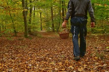 Man Is On A Forest Path For Mushrooms, Holds Wicker Basket In His Hand. Shot From Behind. Mushroom Hunting In Autumn Forest. Golden Leaves On Trees And Ground. Mushrooming Season. Autumn Harvest Fungi
