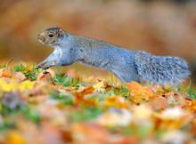 écureuil En Automne