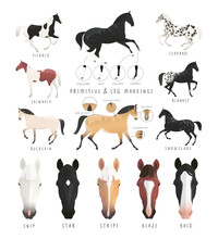Clip Art Illustration Of Horse Facial And Leg Markings, Primitive Markings Of Dun Coat Colouring. Also Variations Of Some Rare Coat Colours