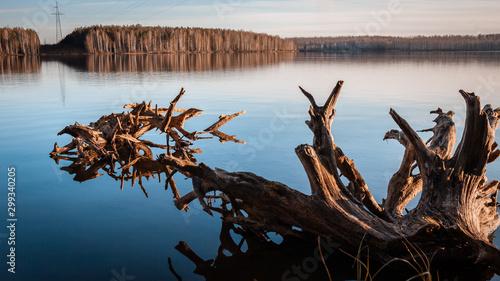 Autocollant pour porte Rivière de la forêt autumn forest on the lake at sunset