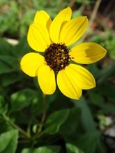 Closeup Of Bright Yellow Wildf...
