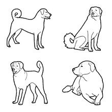 Anatolian Shepherd Dog Animal Vector Illustration Hand Drawn Cartoon Art