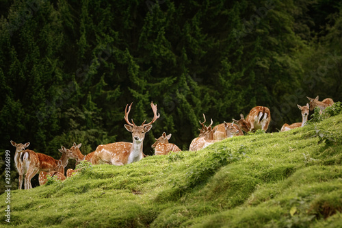 Deers near the Forest Canvas-taulu