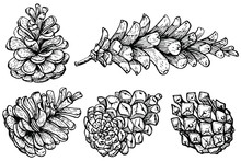 Set Of Pine Cones. Hand Drawn Sketch. Vector Illustration. Traditional Christmas Decoration Symbol For Greeting Card, Poster, Textile, Banner, Website.