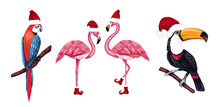 Set Of Winter Tropical Birds Toucan, Parrot And Flamingo In Santa Hat And Shoes. Christmas Design For Cards, Fabric, Wrapping Paper. Merry Christmas And Happy New Year Vertical Greeting Card.