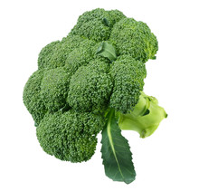 Fresh Green Broccoli Isolated On White Background