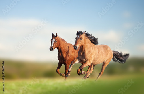 Papel de parede Wild horses running in the field