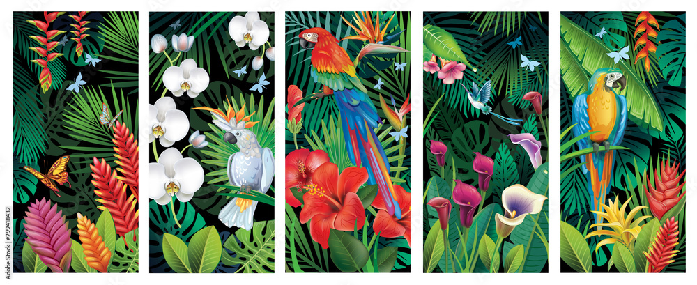 Fototapeta Set of Backgrounds with tropical jungle plants and birds