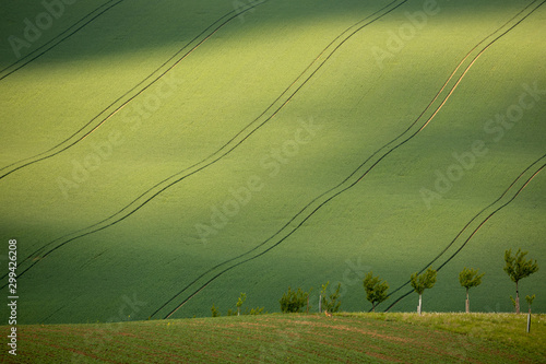 Deurstickers Pistache Moravian fields in spring time, green and yellow landscapes in Czech Republic has awesome structure