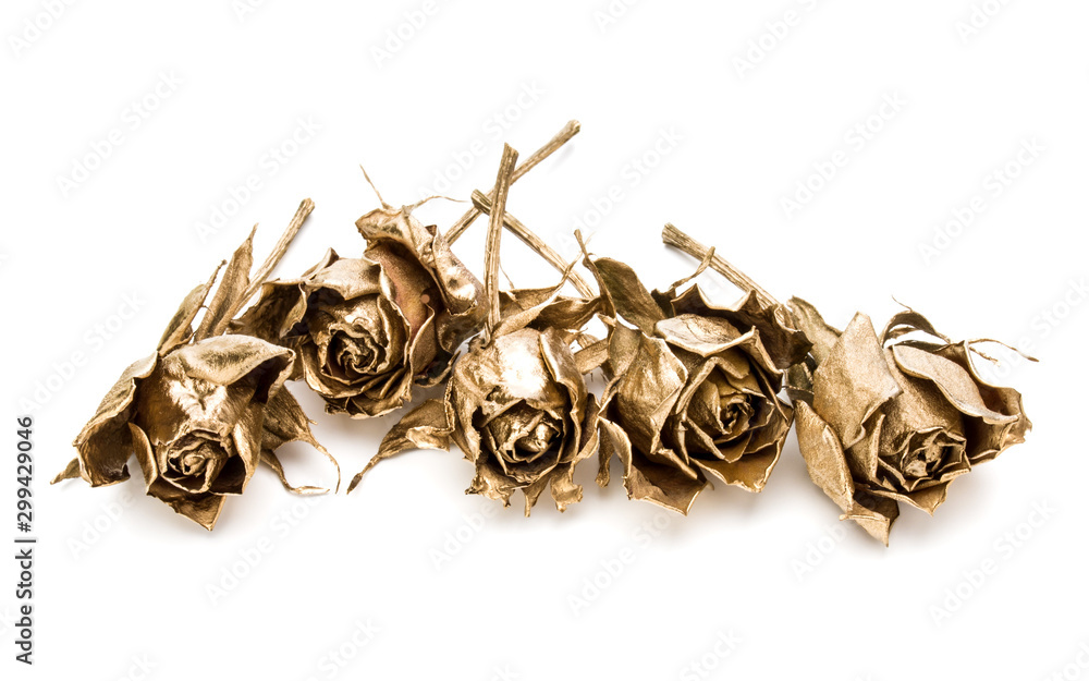 Fototapety, obrazy: gold roses isolated on white background cutout. Golden dried flower heads, romance concept.