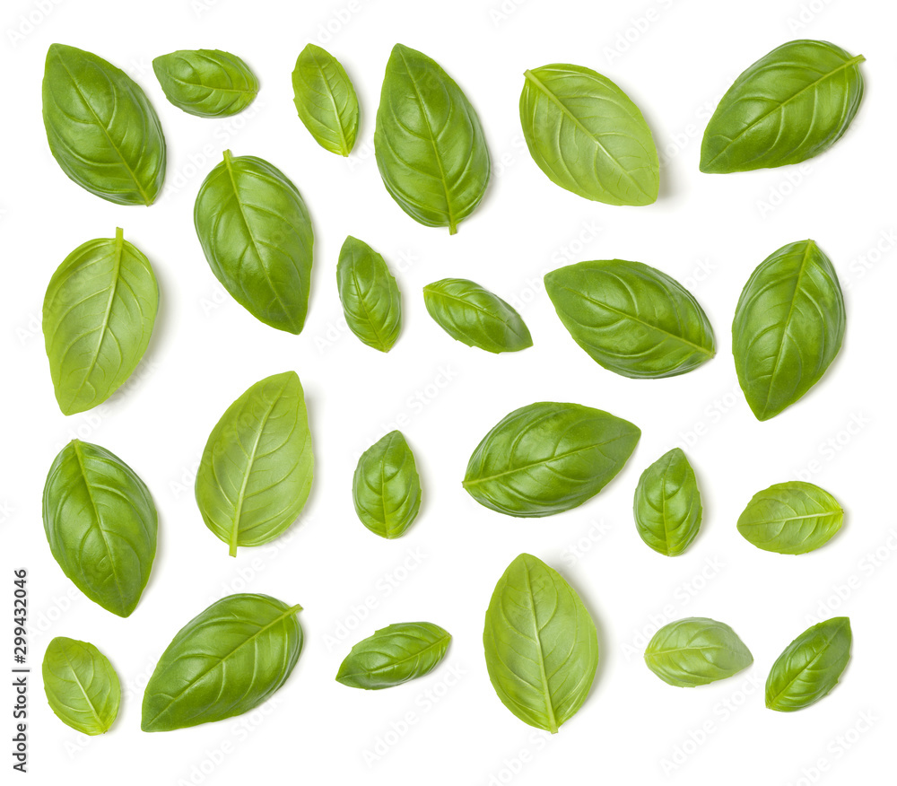 Fototapeta Creative layout made of Sweet Basil herb leaves isolated on white background. Flat lay, top view. Food ingredient pattern.