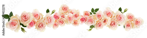 pink Rose flower border isolated on white background cutout. Banner. Wedding concept.