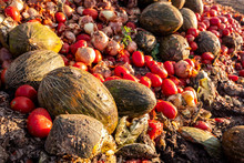 Rotten Fruit And Vegetables, Farmers Waste, Unsustainable Agriculture Concept.