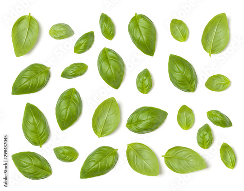 Fototapeta Creative layout made of Sweet Basil herb leaves isolated on white background. Flat lay, top view. Food ingredient pattern. obraz
