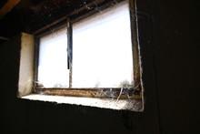 Basement Window Cobwebs