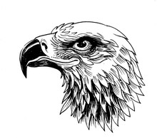 Eagle Head. Ink Black And Whit...