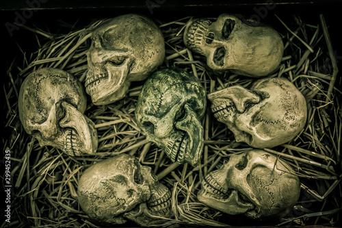 Fotomural  Still Life with human skull