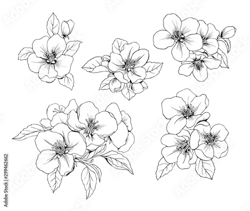Set of Apple flowers. Vector Botanical black and white isolated pattern. - 299462662