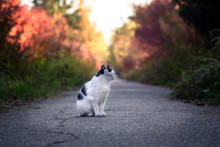 Street Cat On A Forest Path. H...