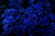 Fern Leaf, Lush Green Foliage In Rainforest, Nature Background