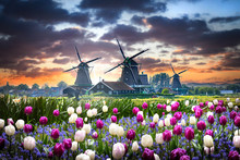 Netherlands Landscape With Bea...