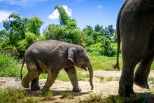 Mother And Baby Elephant In Pr...