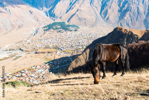 Papel de parede  horse grazing in the mountains