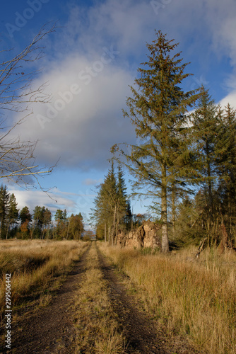 One of the many Logging trails found in Montreathmont Forest, a large old Conifer plantation close to Brechin in the county of Angus Canvas Print