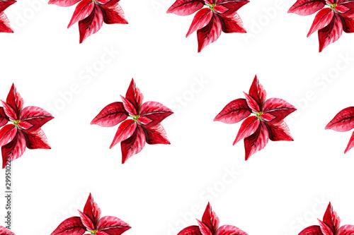 Montage in der Fensternische Künstlich Seamless pattern of poinsettia on white, watercolor background Christmas illustration.