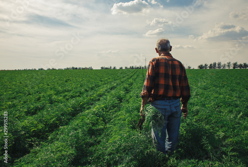Foto Senior farmer standing in field examining the carrots in his hands