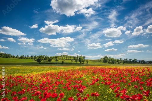 Foto op Plexiglas Weide, Moeras Spring in Tuscany rolling fields in Pienza Firenze Siena Italy