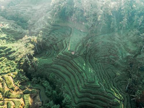 Foto auf Leinwand Khaki Aerial drone view. Rice Terrace at Tegalalang - Bali, Indonesia.