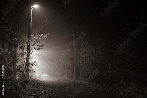 Foto op Aluminium Weg in bos Foggy Walkway in Forest, foggy Forest at night, lanterns in a foggy Forest