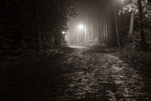 Foggy Walkway In Forest, Foggy Forest At Night, Lanterns In A Foggy Forest