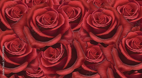 rose red flower love isolated valentine's day love romantic