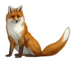 canvas print picture - red fox animal wildlife mammal red