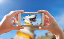 Photographing A Dog. Woman Taking A Photo With The Camera Of A Smartphone. A Person Photographing Her Pet With A Cell Phone.