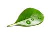 Leinwandbild Motiv green leaf with water drops isolated on white background