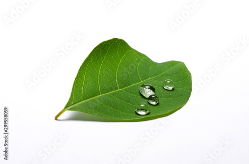 Stampa su Tela green leaf with water drops isolated on white background