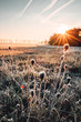 Leinwanddruck Bild - Beautiful wild nature meadow with frozen grass and flowers on a winter morning with golden sunrise light and colorful rainbow waterdrop reflections. Idyllic nature landscape