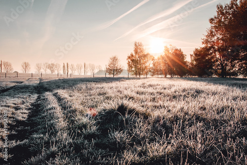 Obraz Calm and wonderful peaceful winter morning with frozen grass meadow and white nature and colorful ealry morning sunrise tones. Frosty white winter wonderland in the countryside with shadows - fototapety do salonu