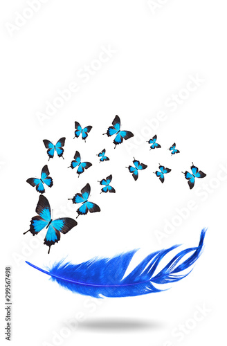 Fotografie, Obraz  color flying tropical butterflies with feather