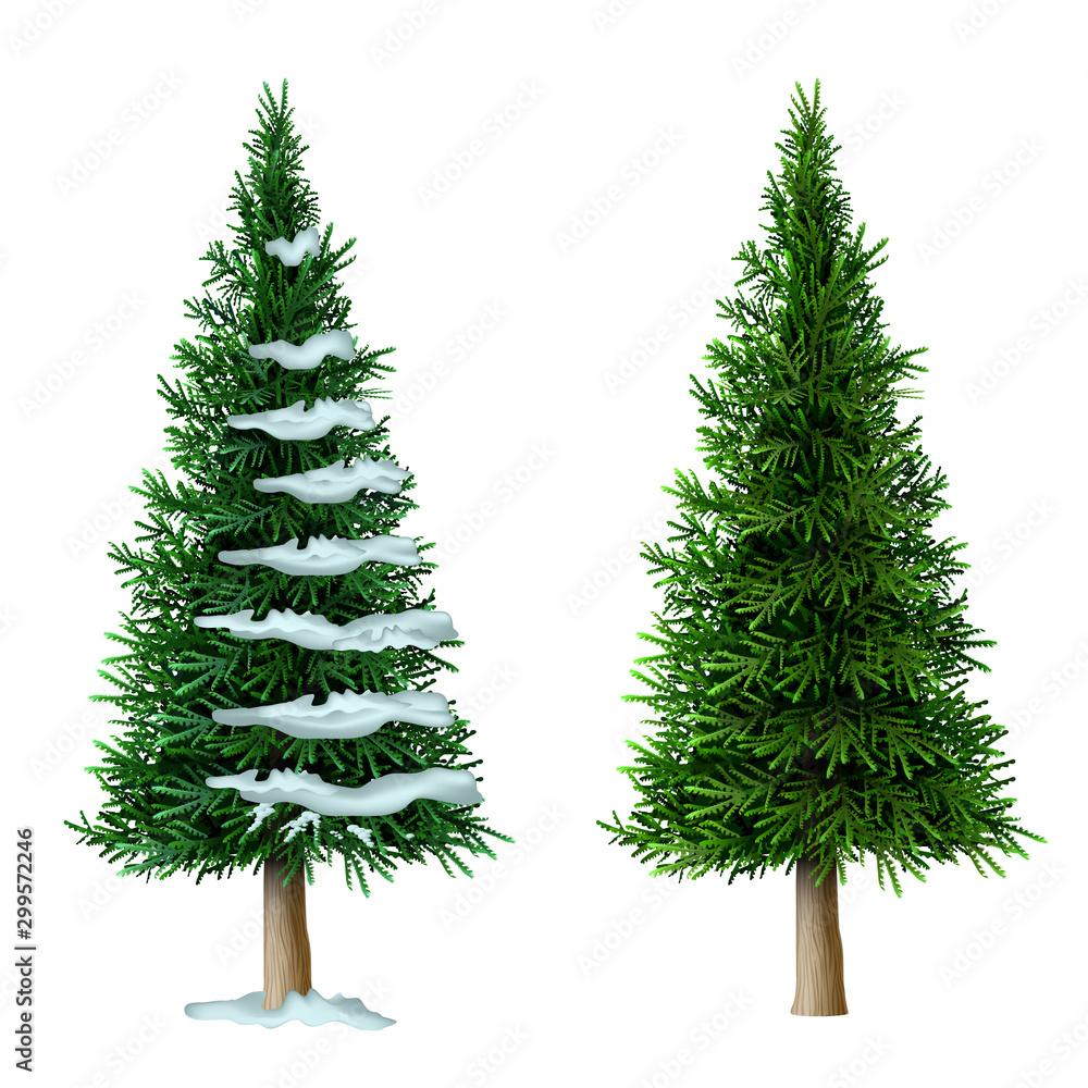 Fototapety, obrazy: Realistic vector pine tree set isolate