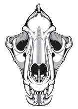 Image Of A Lion Skull That Can...