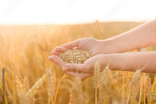 harvesting, nature, agriculture and prosperity concept - hands holding ripe whea Wallpaper Mural