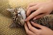 Woman petting cute tabby cat at home, closeup