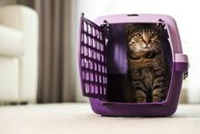 Cute Tabby Cat In Pet Carrier ...
