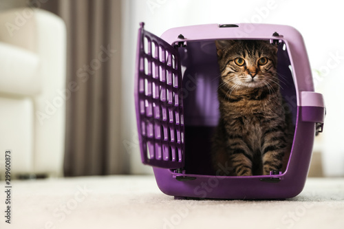 Photo Cute tabby cat in pet carrier at home