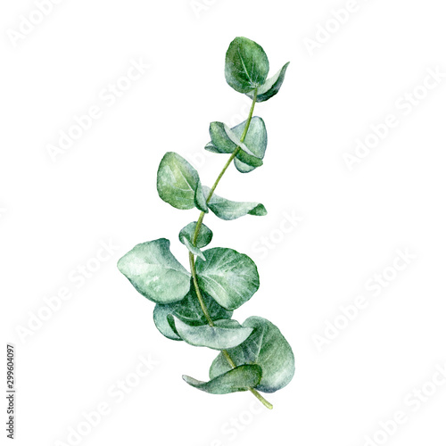 Pinturas sobre lienzo  Eucaliptos leaf watercolor isolated on white background