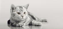 One Grey Stripy Beautiful Litt...